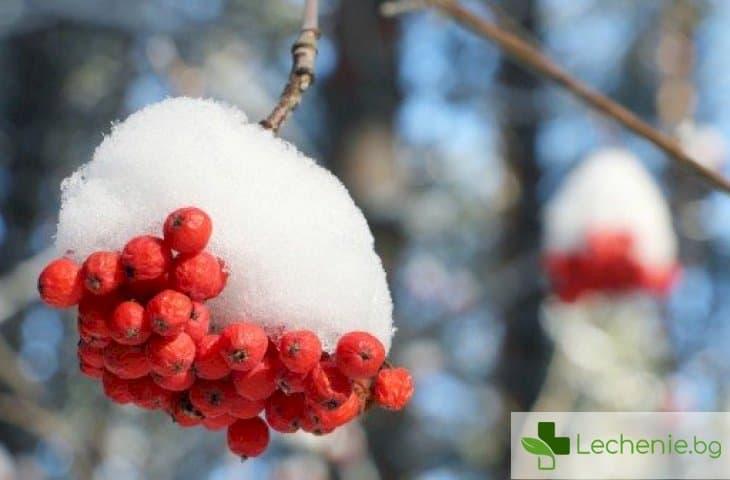 С какво да се храните, за да не мръзнете и да не се разболявате през зимата