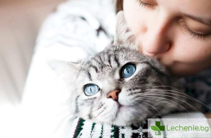 Лекарство за артрит при животни