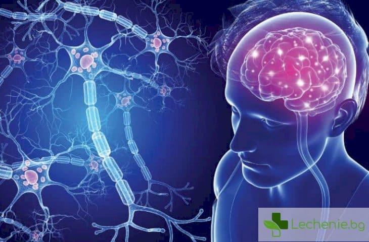 Новооткрит маркер разкрива какви са тайните на множествена склероза