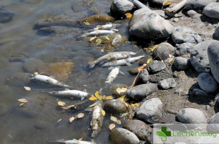 Мъртва риба в Марица, опасност от отравяне на питейната вода