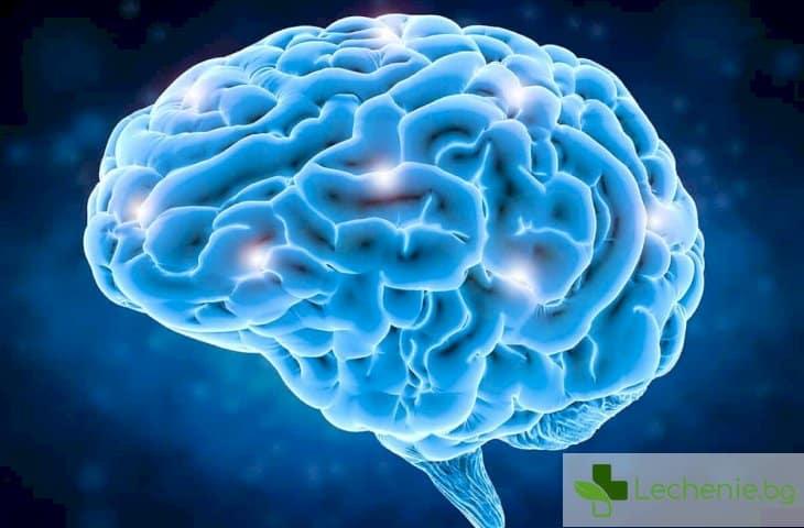 Недоразвит човешки мозък успя да порасне в епруветка