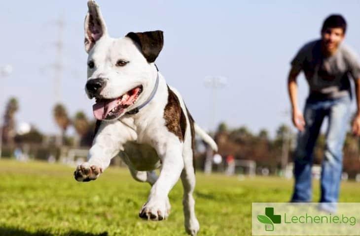 Отглеждането на кучета на 50% в зависимост от гените