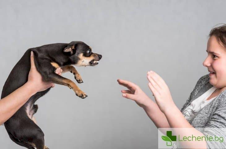 Заради COVID-19 пандемията кучетата хапят повече деца