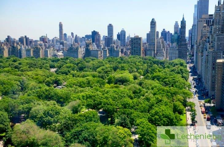 Паркове и зелени площи в големия град - извор на дълголетие