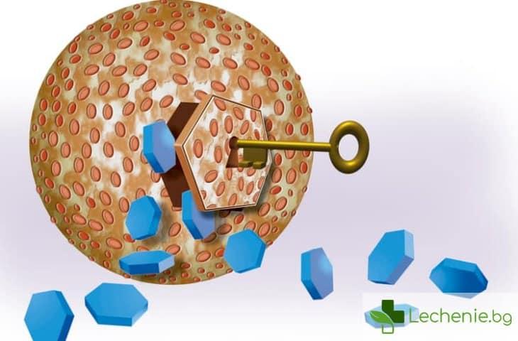 Диабет тип 1 се предотвратява още в зародиш в ново изследване