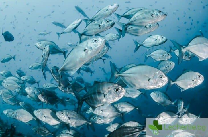 От мутация развалената риба може да мирише приятно