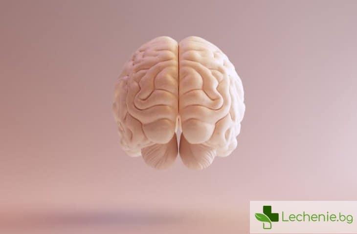 Как мозъкът може да се съживи след смъртта