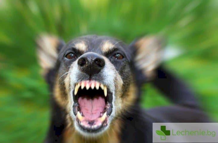 Галене на бясно животно невинаги води до заразяване с бяс