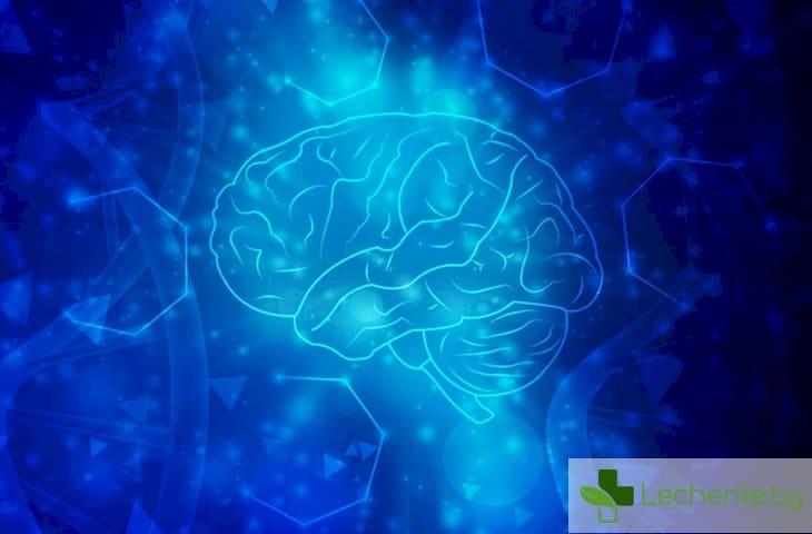 Как старее мъжкият мозък спрямо женския