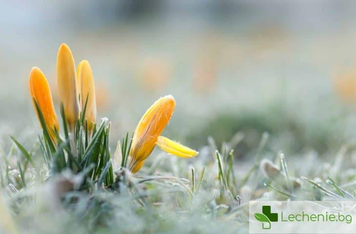Пролет на прага – как да укрепваме имунитета и трябва ли